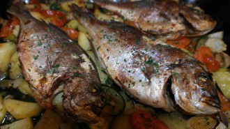 sea-bream-261151_1280